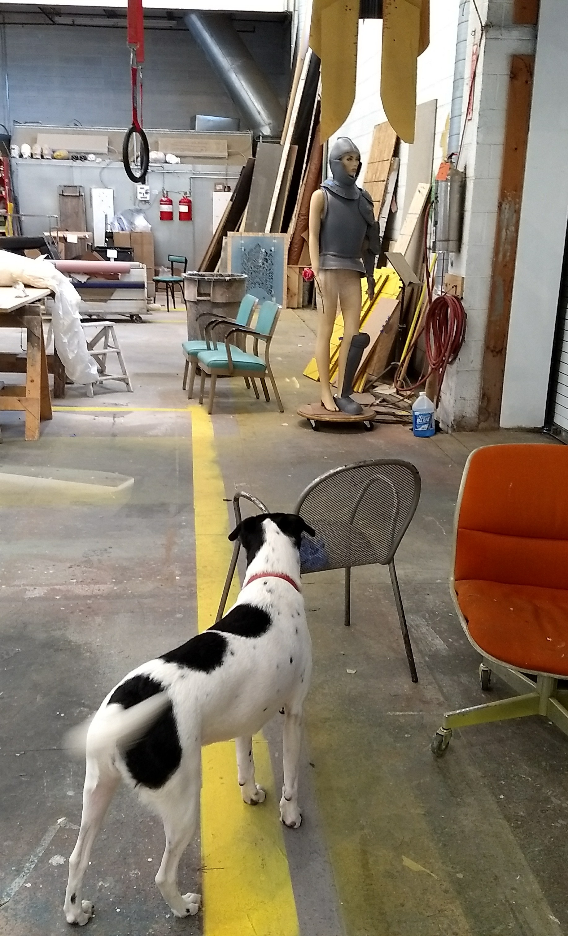 Sometimes, STC's Scenic Painter Laura Lowe's dog Posie visits the paint shop. She says,